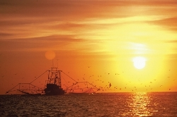 Shrimp boat off Gulfport, Mississippi